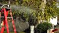 Guacamole Mortar test, #2 Image