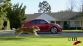 Volkswagen - 'The Dog Strikes Back' Image