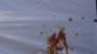 Upshot - Fake Coffee - Test 1 Image