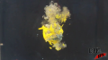 Vertical Yellow Glass - Under Water - Glitter and Silicone - Explosion - Test Image