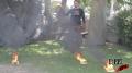 Nike Cone Flame Test Image