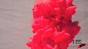Red Fluid Cloud Test 4 Image