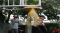 Pistachio Speed Bag Test 1 Image