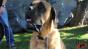 Dog slobber test 2 Image