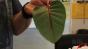 Plant tear dye Image