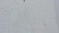 Test 3 Vermiculite Image