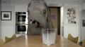 Oreo - 'Elephant' Image