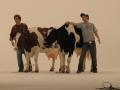 Carls Jr Milkshake cow Image