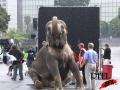 Vodafone-Tai the elephant Image