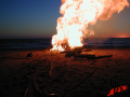 Seal - Bonfire -  Image